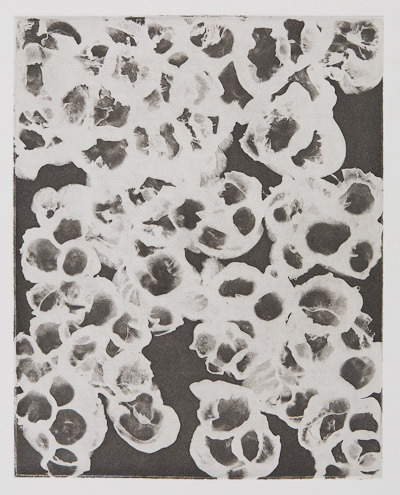 Etching by Dan Treado titled 'Smells Like Measles'